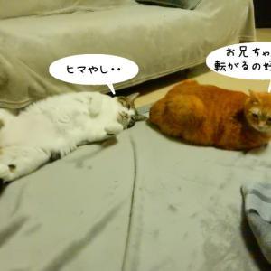 ちゅーるあげますよ。