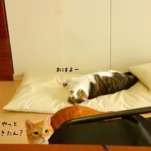 保護猫・・昨日の続き