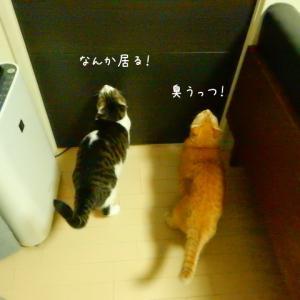 子猫の名前