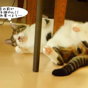 無邪気な猫達