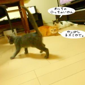 堂々としたチビ猫