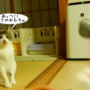 無邪気なチビ猫
