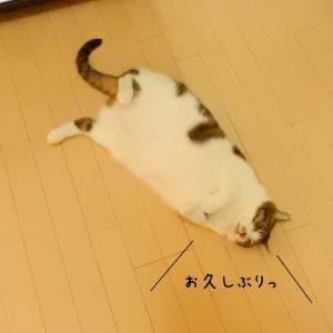 猫の日なので・・。