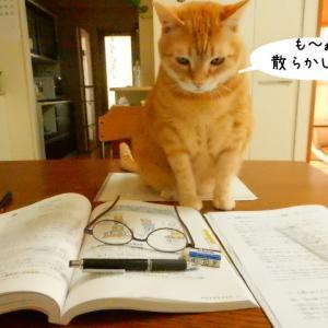 猫はジャマする生き物。