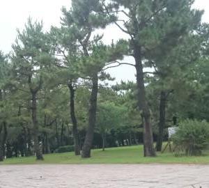 潮干狩り 横浜海の公園