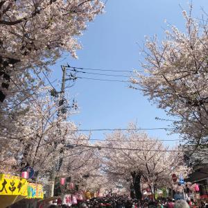 お客様&桜祭り