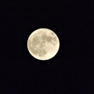 咲夜は満月