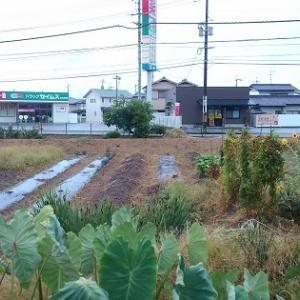 雨で潤う秋野菜