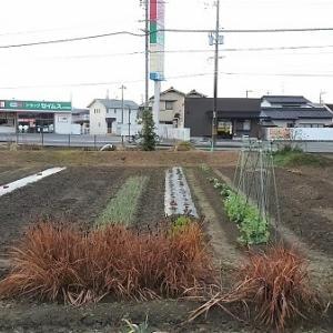 第一菜園の様子