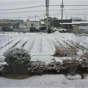 今季初の雪景色