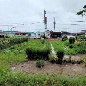 大雨だった