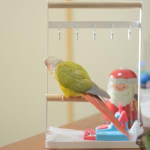 ウロコインコ  まちゃぷちゃさん☆これは! ◯ ピグライフ☆ぴよぴよ風呂