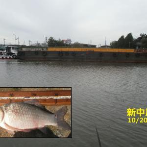 新中川釣行 (10/20) !