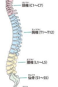 脊椎の仕組みを理解しよう!(勉強会)