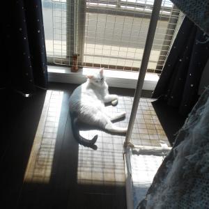 窓辺でひなたぼっこ