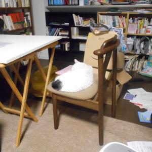 椅子の上で寝んね