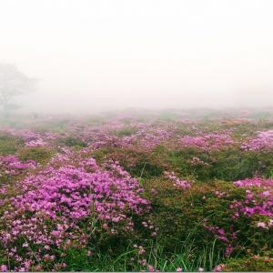 気軽な霧島山歩きはミヤマキリシマのスポットへ