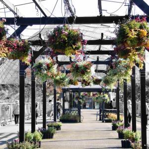 とっとり花回廊(2) はな・ハナ・花