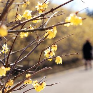 「幸梅橋から♪」 - 園芸総合センター③ -