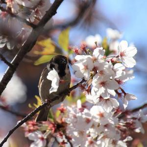 〜公園の鳥たち〜 亀鶴公園2020(2)