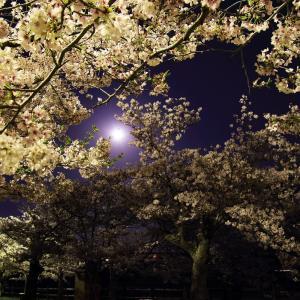 〜満月〜 亀鶴公園2020(3)