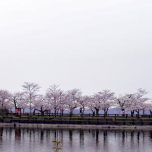 〜桜写真のメソッド〜 亀鶴公園2020(4)