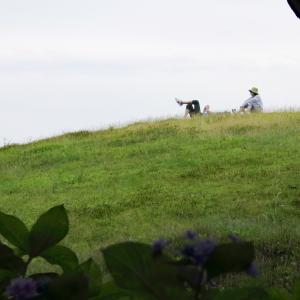 まんのう公園の「紫陽花」(2)