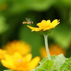 (3)まんのう公園〜花と昆虫〜