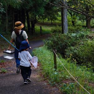 〜モンキアゲハ〜 みろく自然公園(2)
