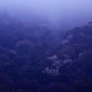 さぬき市の山桜(後編)
