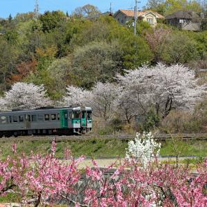 桜と桃と列車   #高徳線