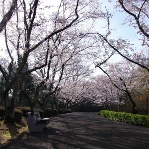 公渕森林公園 〜桜並木〜