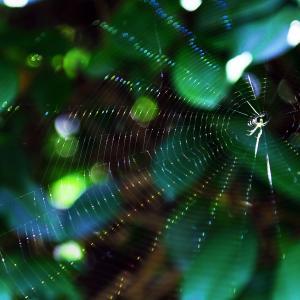 -習作- 蜘蛛の糸