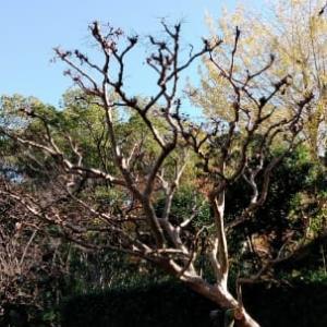 自然樹形の剪定が