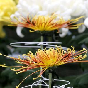 京都府立植物園 2019 霜月 上旬