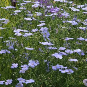 アマの花とジャノメチョウの仲間