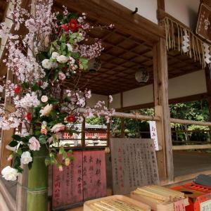 平岡八幡宮 椿 桜