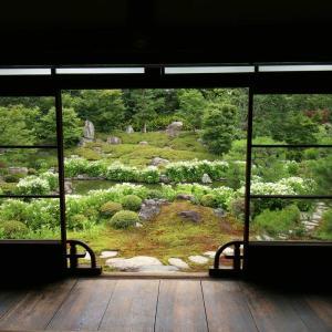 両足院の方丈・書院から見る半夏生のお庭