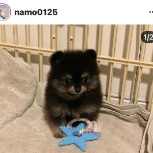 ナモさんのコミンちゃんに似た新しい家族