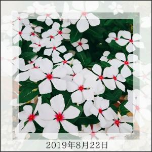 ◆ショック!台風被害で花壇の花が・・・(泣)