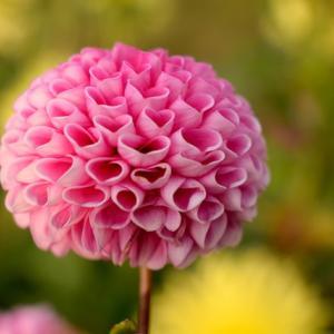 心に花を咲かせましょう