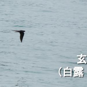 令和3年9月17日(金)、七十二候「玄鳥去る(つばめさる)」に入りました。つばめが南に...