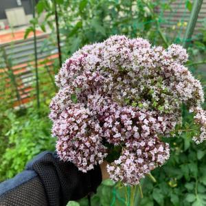 ハーブの小花