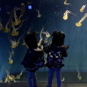江の島水族館はクラゲも主役!!