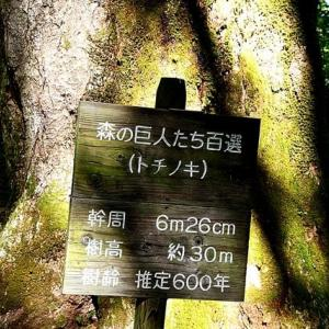 「森の巨人」に会いに来ました