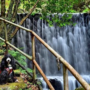 日本の滝百選-大樽の滝へ