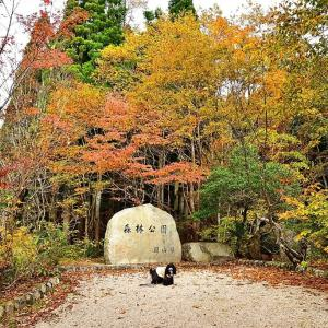 岡山森林公園でお散歩