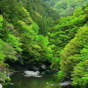 新緑の汗見川②