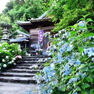 しっとりと紫陽花神社