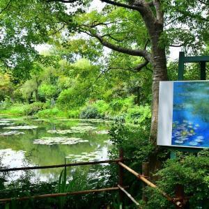 モネの庭「水の庭」